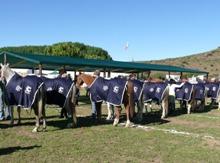 2012_ride_best_horses.jpg